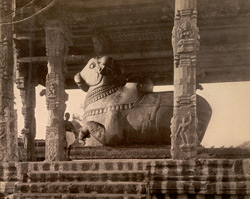 Monolith Bull in the Temple grounds, Tanjore